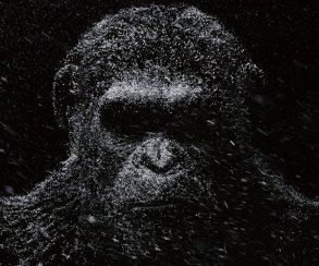 Картинадня. Все о«Планете обезьян», польские мемы иноминанты «Эмми»