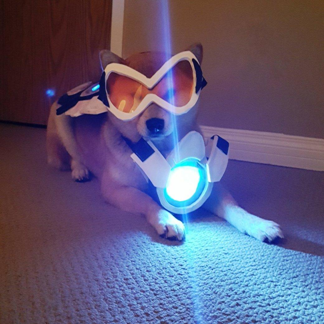 Сногсшибательный собакосплей Overwatch . - Изображение 1