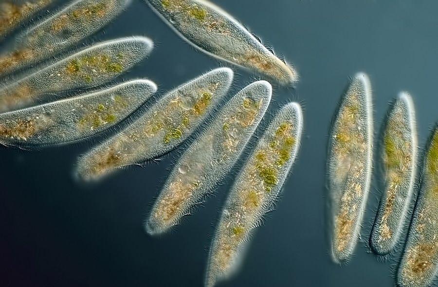 Биоинженер из Стэнфорда придумал видеоигры на основе микроорганизмов - Изображение 1