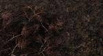 Этот мод для Skyrim сделает растительность по-настоящему реалистичной. - Изображение 7