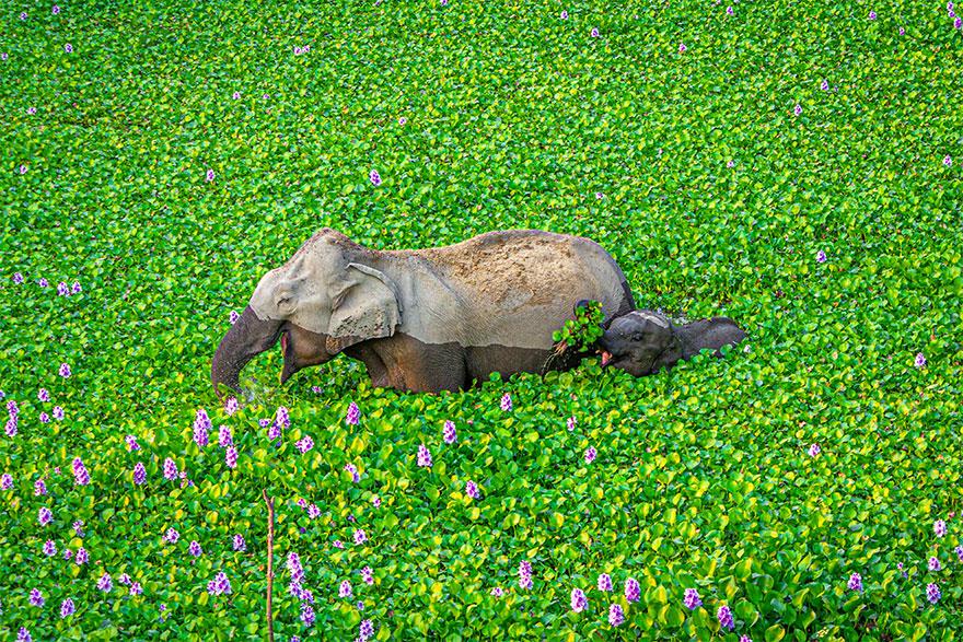 Позитивная галерея: 40 фото сконкурса насамый смешной снимок дикой природы   Канобу - Изображение 3961