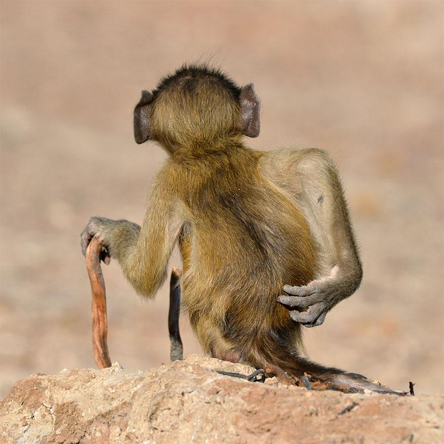 Позитивная галерея: 40 фото сконкурса насамый смешной снимок дикой природы   Канобу - Изображение 3973