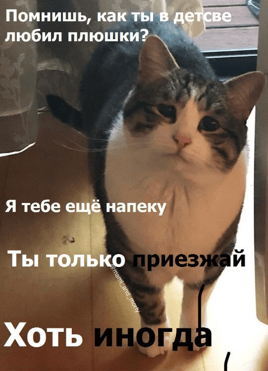 Мем про кошку иплюшки переделывают под все насвете. Получается смешно (новсе еще грустно) | Канобу - Изображение 2
