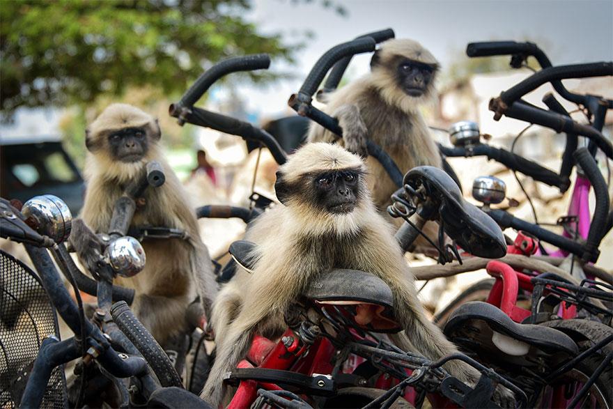 Позитивная галерея: 40 фото сконкурса насамый смешной снимок дикой природы   Канобу - Изображение 3995
