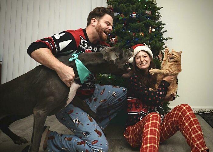 Галерея дурацких рождественских фотографий, которые испортили собаки | Канобу - Изображение 5907