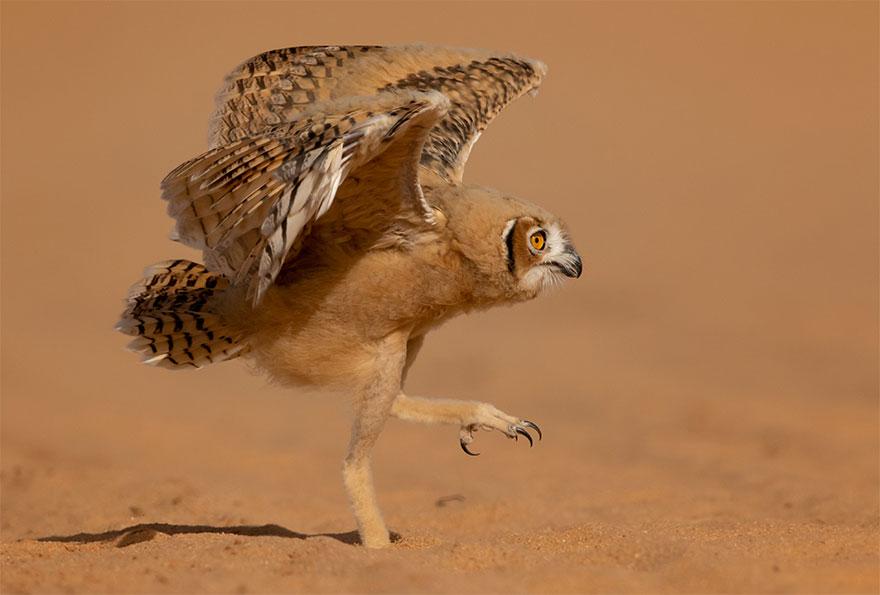 Позитивная галерея: 40 фото сконкурса насамый смешной снимок дикой природы   Канобу - Изображение 3994